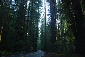 Snirklete veier og svææære trær!