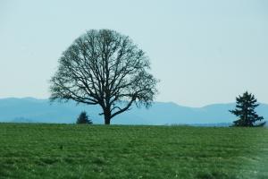 Vakre Oregon :-)