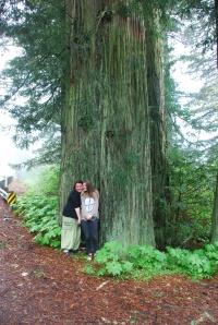 Mye av redwoodskogen er fredet.