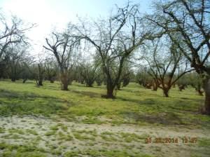 I Vesles nærområdet er åkrene beplantet med vindrue-stokker og hasselnøttertrær.