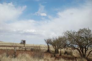 Stepper, kratt og gress er jaggumeg pent det og :-)