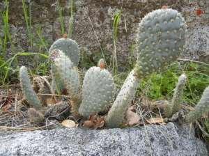 Kaktus, nakne indianere og gullgravere. Hva blir det neste, lissom?