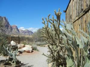 Kaktus, sand og vindslitt plank. Vi er i cowboyland!