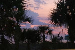 Palmer i solnedgang.