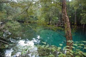 Manatee Springs, med et boblende oppkomme av ferskvann langt nede i dypet.