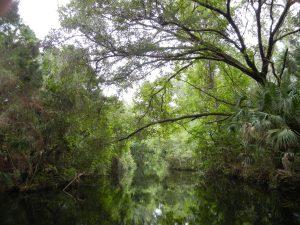 ET besøk i Homosassa Spring Park starter med en halvtimes elvebåttur ut til selve reservatet.